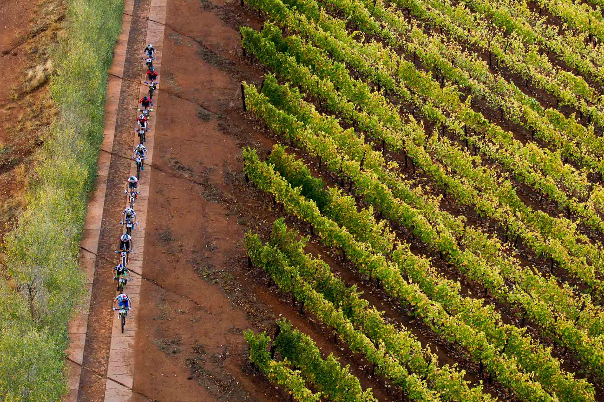 The lead bunch climb out of Thelema Wine Estate during stage 6 of the 2016 Absa Cape Epic Mountain Bike stage race from Boschendal in Stellenbosch, South Africa on the 19th March 2015 Photo by Gary Perkin/Cape Epic/SPORTZPICS PLEASE ENSURE THE APPROPRIATE CREDIT IS GIVEN TO THE PHOTOGRAPHER AND SPORTZPICS ALONG WITH THE ABSA CAPE EPIC ace2016