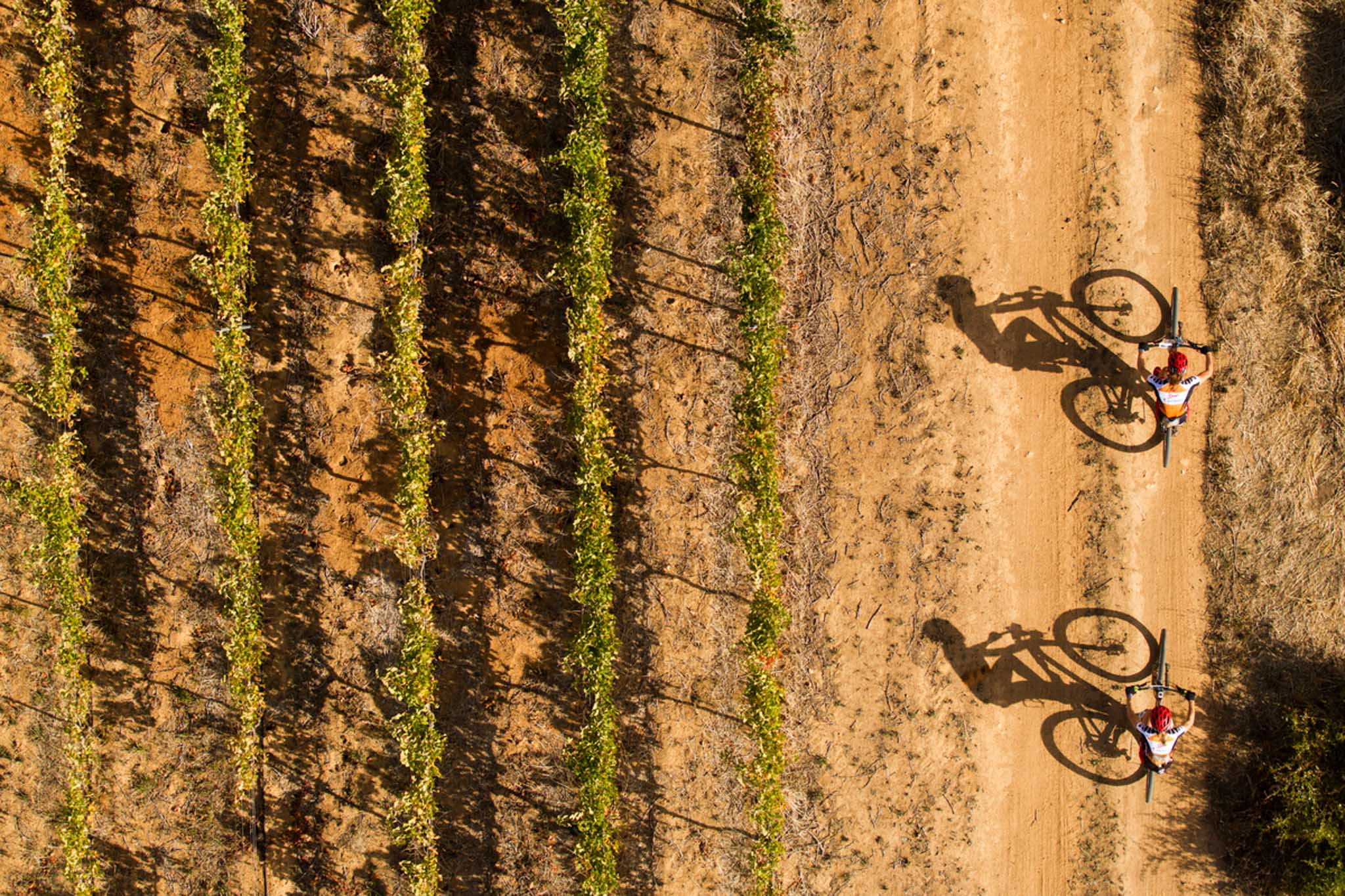 Overall womens winners Annika Langvad & Ariane Kleinhans of Spur-Specialized during the final stage (stage 7) of the 2016 Absa Cape Epic Mountain Bike stage race from Boschendal in Stellenbosch to Meerendal Wine Estate in Durbanville, South Africa on the 20th March 2016 Photo by Gary Perkin/Cape Epic/SPORTZPICS PLEASE ENSURE THE APPROPRIATE CREDIT IS GIVEN TO THE PHOTOGRAPHER AND SPORTZPICS ALONG WITH THE ABSA CAPE EPIC ace2016